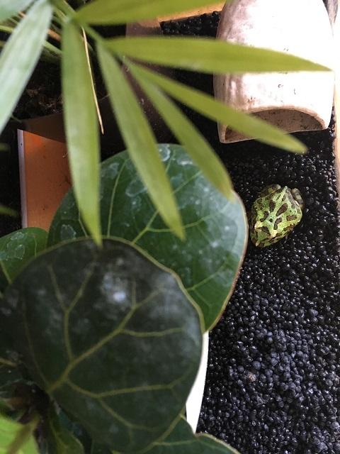 ビバリウムに入れた観葉植物