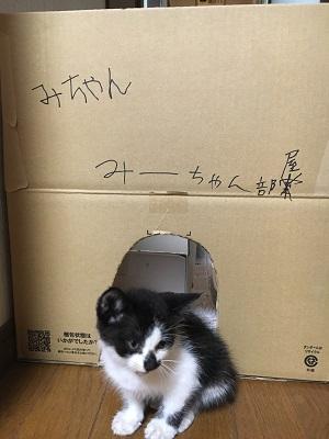 ダンボールで作った猫の家