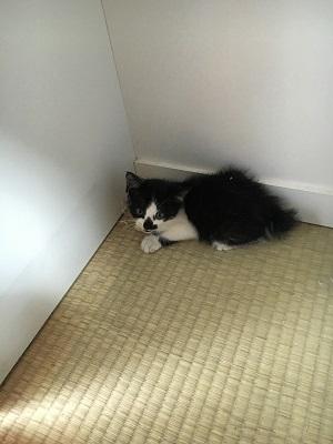 鏡台の下にいる子猫