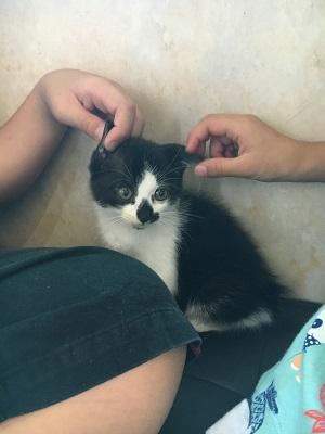 【捨て猫を拾ったらまず動物病院へ!】みーちゃんを連れて行ってきました