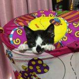 【画像あり】猫のノミ皮膚炎は夏に増える!?洗うだけでは防げない!良い予防法は?