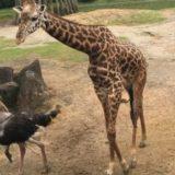 鹿児島の平川動物公園に行ってきた!足湯や周遊バスもあって楽しいよ!