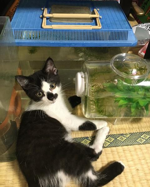 魚を狙うみーちゃん3