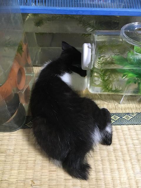 魚を狙うみーちゃん2