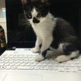ことわざ【犬は人につき、猫は家につく】猫は生まれ育った場所を離れない!?