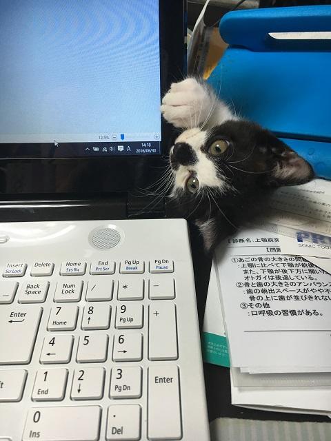 パソコンをかじるみーちゃん