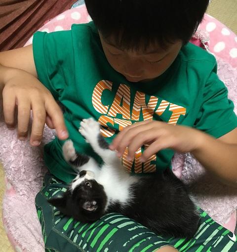 僕の指で遊ぶ猫