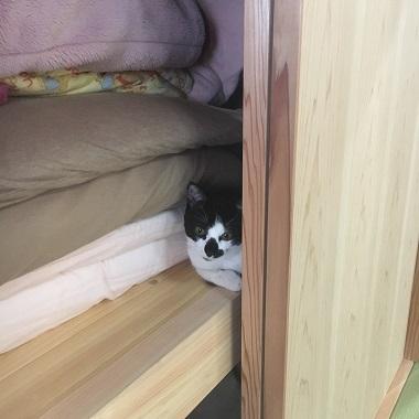 押入れから覗く猫のみーちゃん