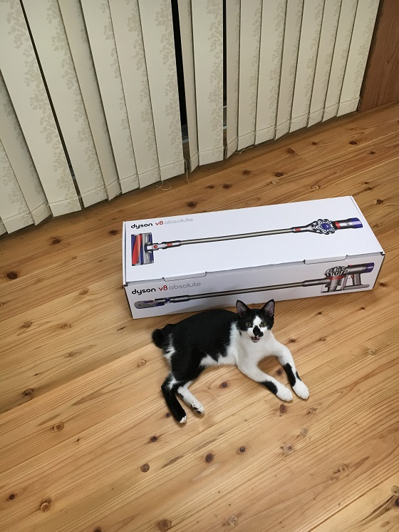 猫と一緒に写るダイソンの箱