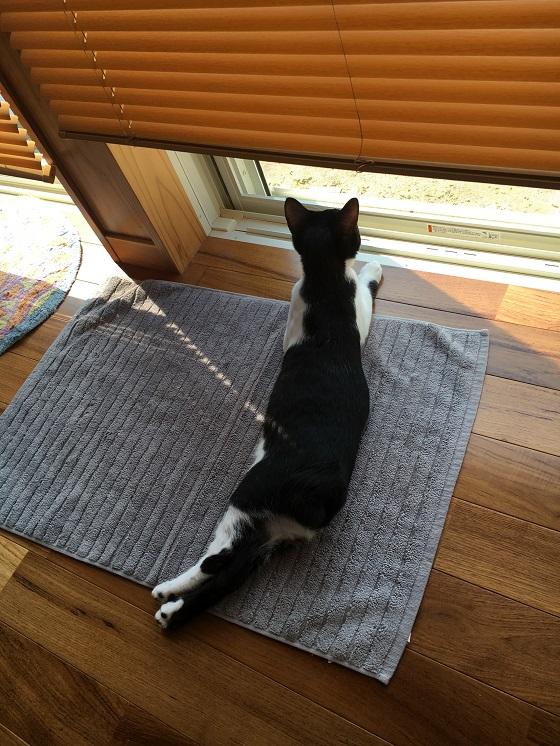 外を眺めるみーちゃん3