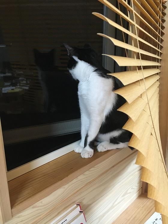外を眺めるみーちゃん