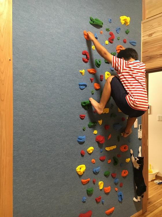 ボルダリングを登る息子と猫のみーちゃん