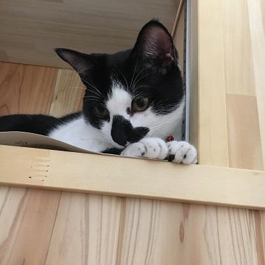 猫のみーちゃん