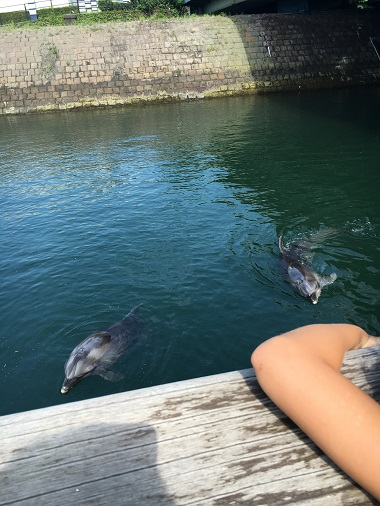 イルカ水路のイルカ