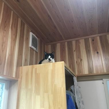 棚の上に乗るみーちゃん