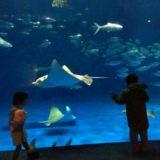 かごしま水族館「いおワールド」に行ってきた!イルカ水路やジンベエザメなど見どころいっぱい!