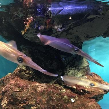 イカの水槽