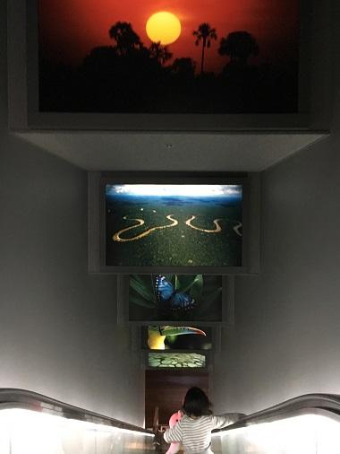 南米らしい写真が飾ってあるエスカレーター