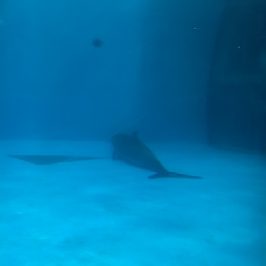 プールの底に沈んでいるイルカ