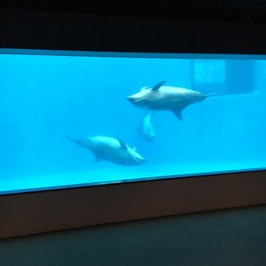 地下から見るイルカの水槽