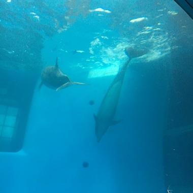 浮上するイルカ