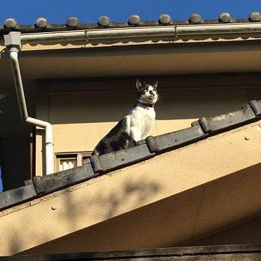 屋根の上にいるみーちゃん
