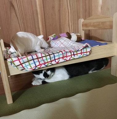 おもちゃのベッドの下にもぐる猫のみーちゃん
