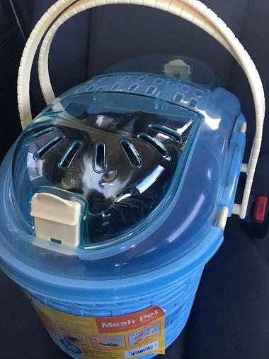 キャリーバッグの中の猫のみーちゃん