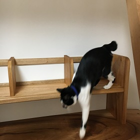 机の上をうろうろする猫のみーちゃん