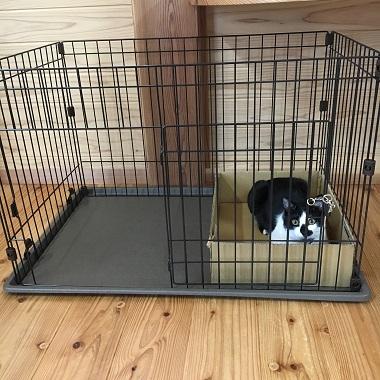 犬のサークルに入った猫のみーちゃん