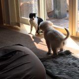 猫がいる家で犬を飼うとケンカする?みーちゃんとレン君の場合