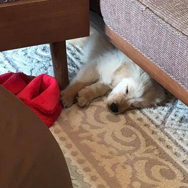 ソファーの下で眠るレン君
