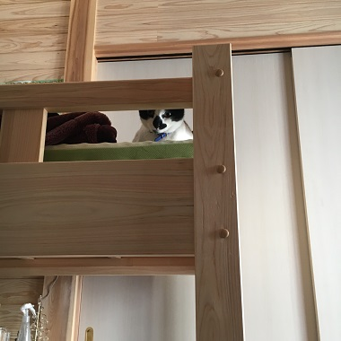 僕の部屋のベッドの上の猫のみーちゃん