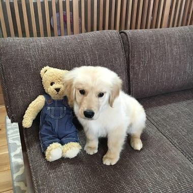 大型犬を飼うとお金がかかる?小型犬と比較してみた(ついでに猫も)