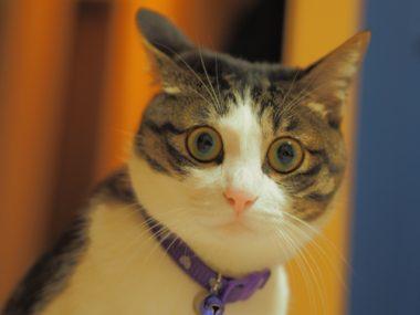 猫の唖然とした顔