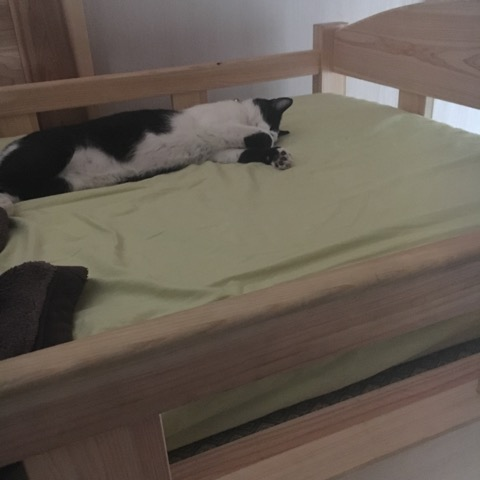 ベッドで眠るみーちゃん