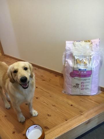 【犬はエサが大事な理由】良いドッグフードをネットで安く購入しよう!