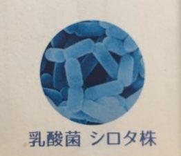 シロタ株(パンフレットより)