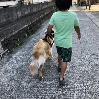 僕と散歩するレン君