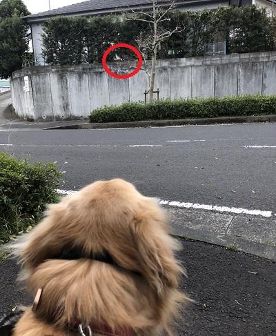 近所の飼い犬たろうちゃん